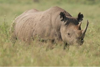 Biodiversity benefits of Animal Kingdom include protection and conservation of many species within the project zone, including the Eastern Black Rhino, which is listed as a critically endangered species.