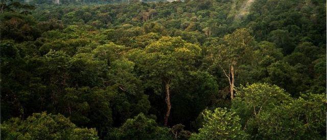 Amazon rainforest: Phil P Harris via Wikimedia Commons.