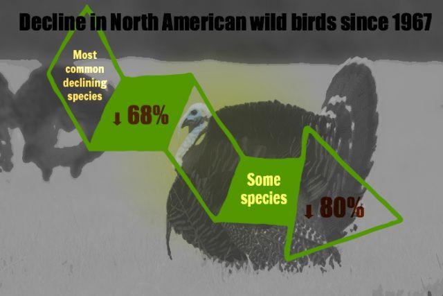 Based on National Audubon Society's Christmas Bird Count: Graphic: Julia Whitty. Photo: Yathin S Krishnappa via Wikimedia Commons