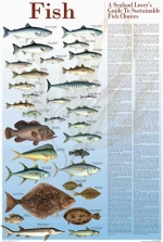 img_posters_114-Sustainable-Fish.jpg