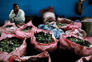 Bags of Coca Leaves